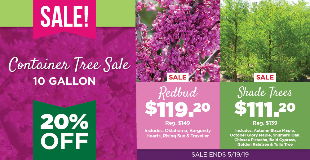 Container Tree Sale