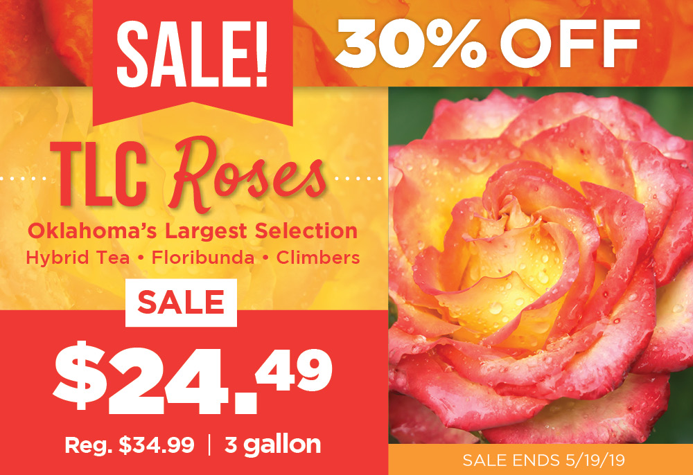 TLC Rose Sale