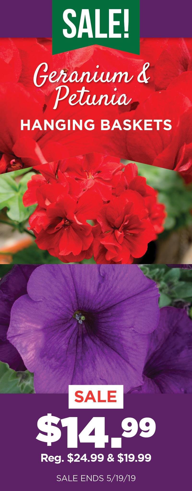 Geranium and Petunia Sale