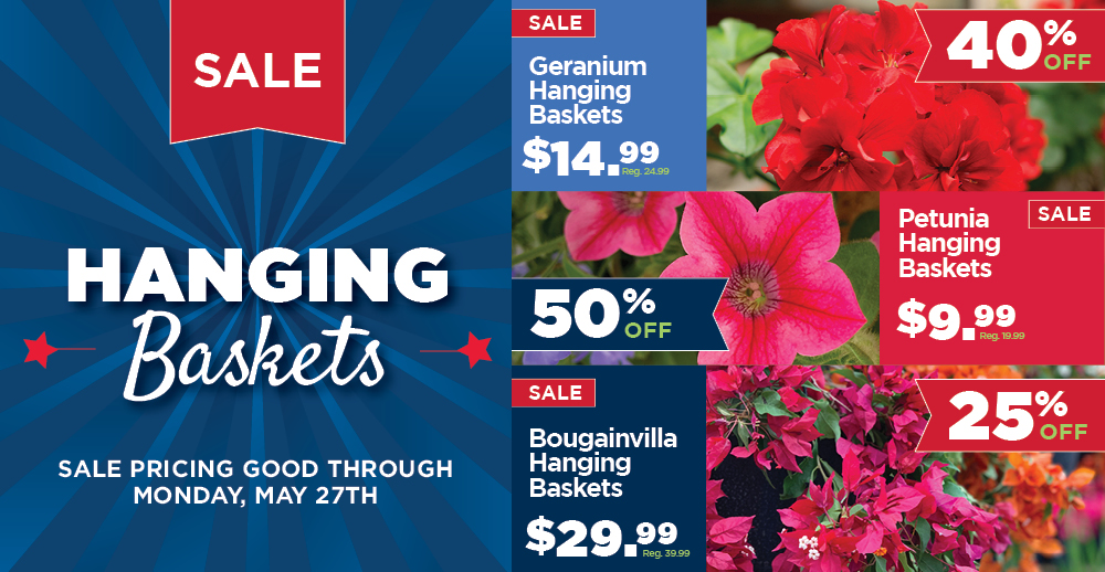 Hanging Baskets Sale