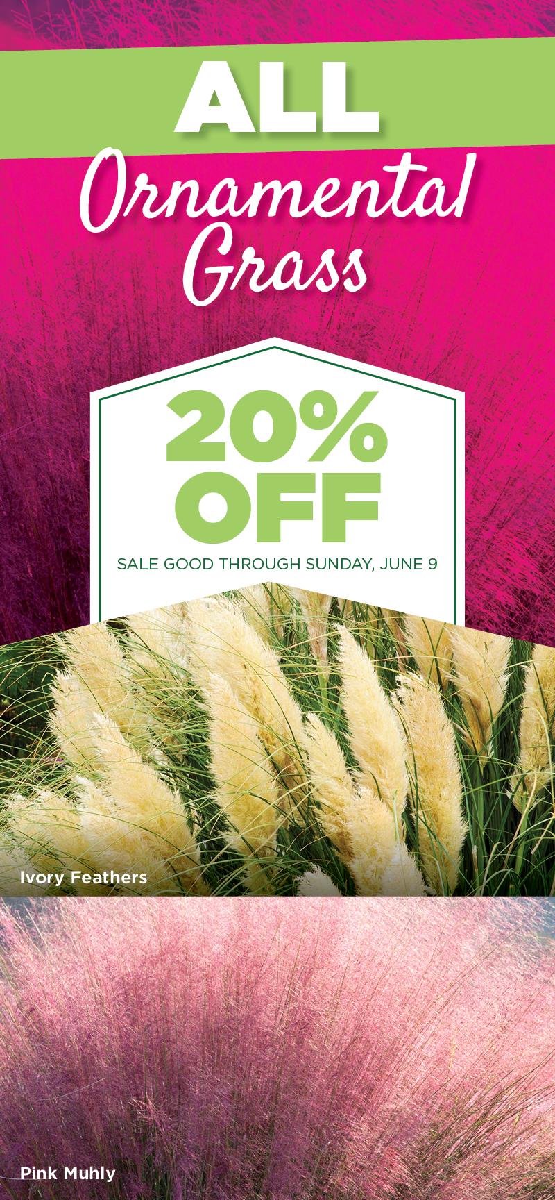 Ornamental Grass Sale | TLC