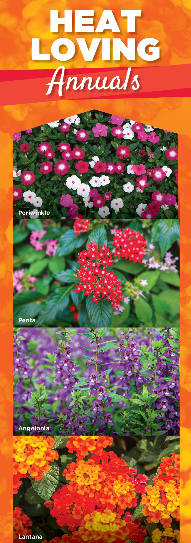 Heat Loving Annuals | TLC