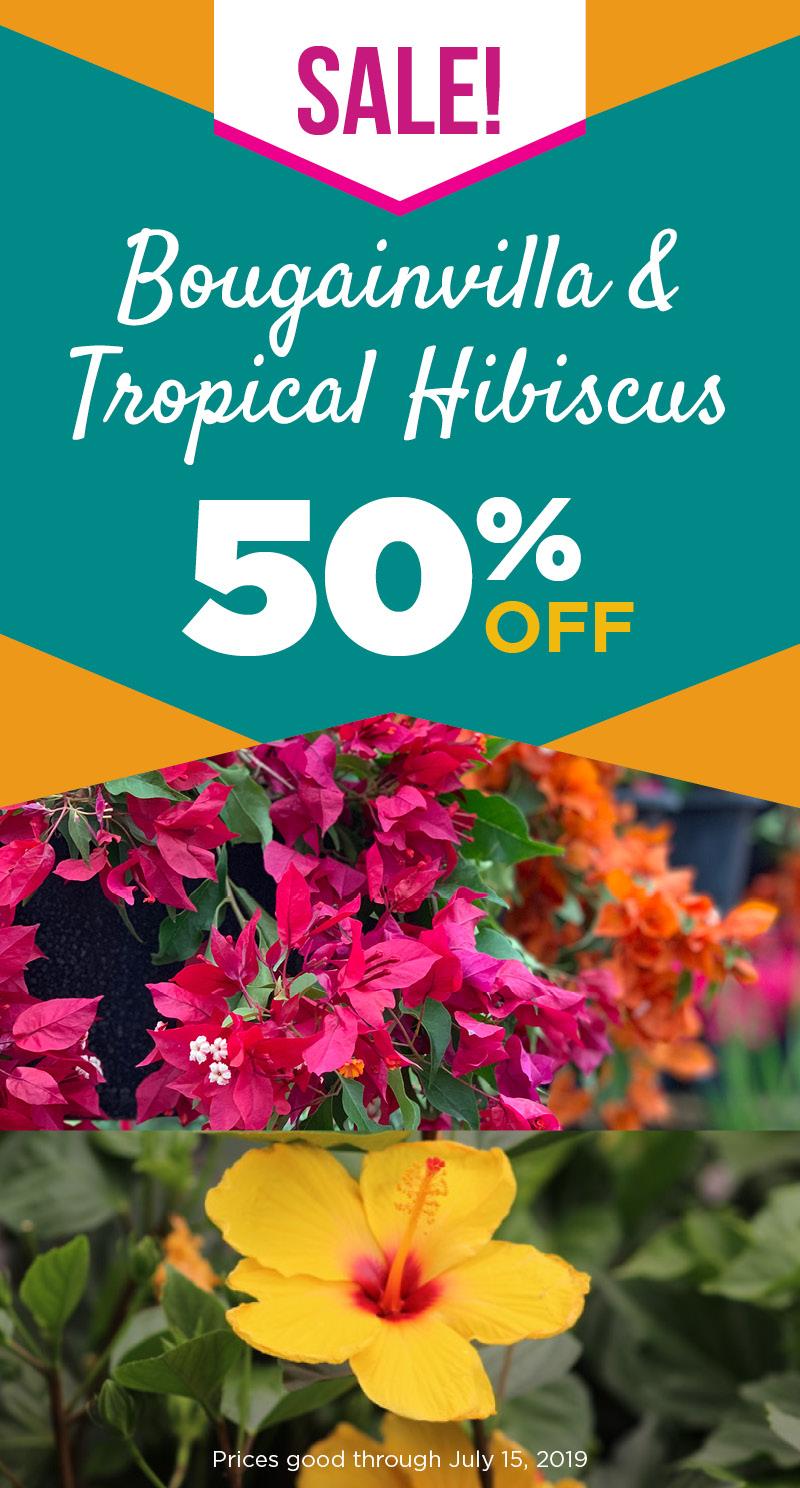 Bougainvilla & Tropical Hibiscus | TLC