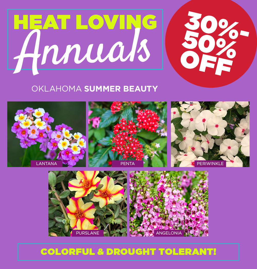 Heat Loving Annuals | TLC Garden Centers