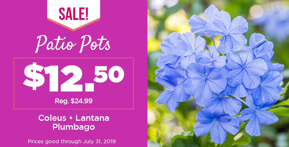 Patio Pots | TLC Garden Centers
