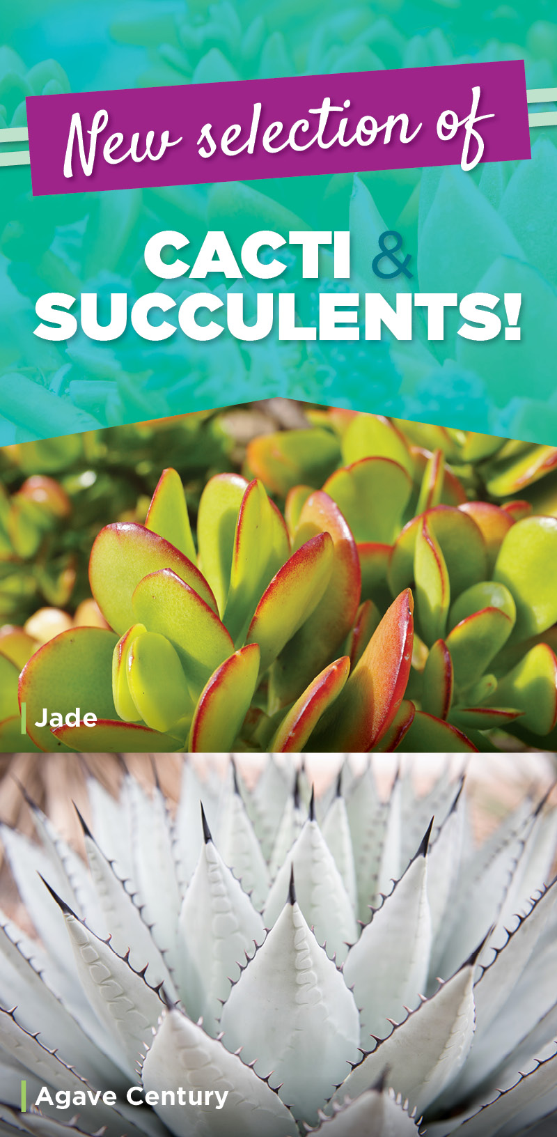 New Selection of Cacti and Succulents | TLC Garden Centers