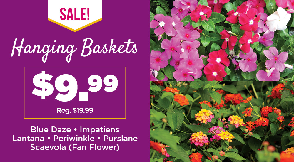 Hanging Baskets | TLC Garden Centers