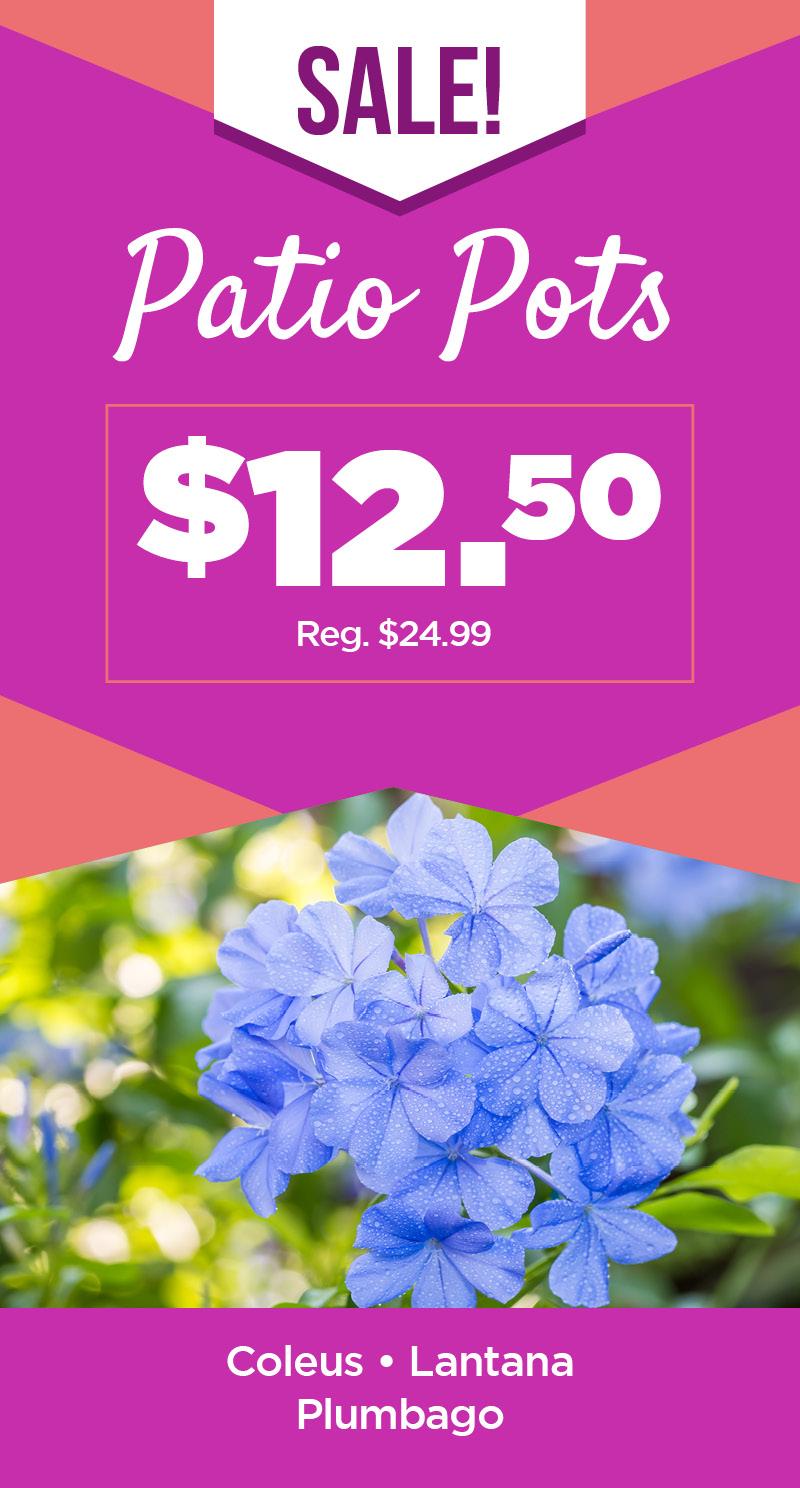 Patio Pots | TLC Garden Centers