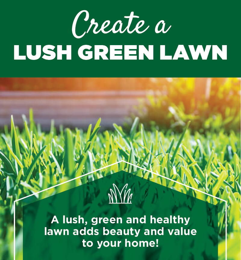 Create a Lush Green Lawn | TLC Garden Centers