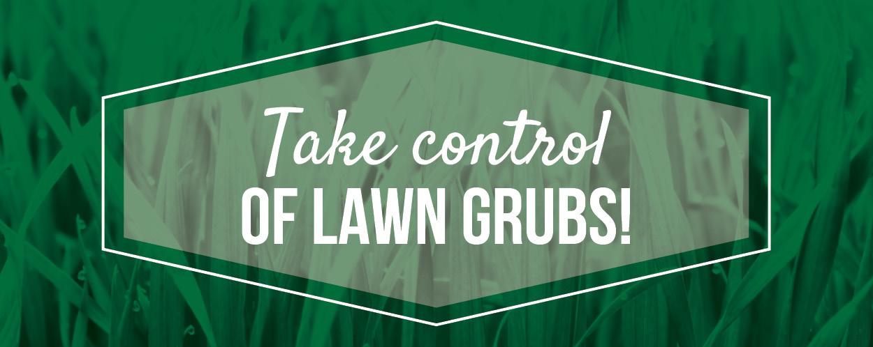 Lawn Grubs | TLC Garden Centers