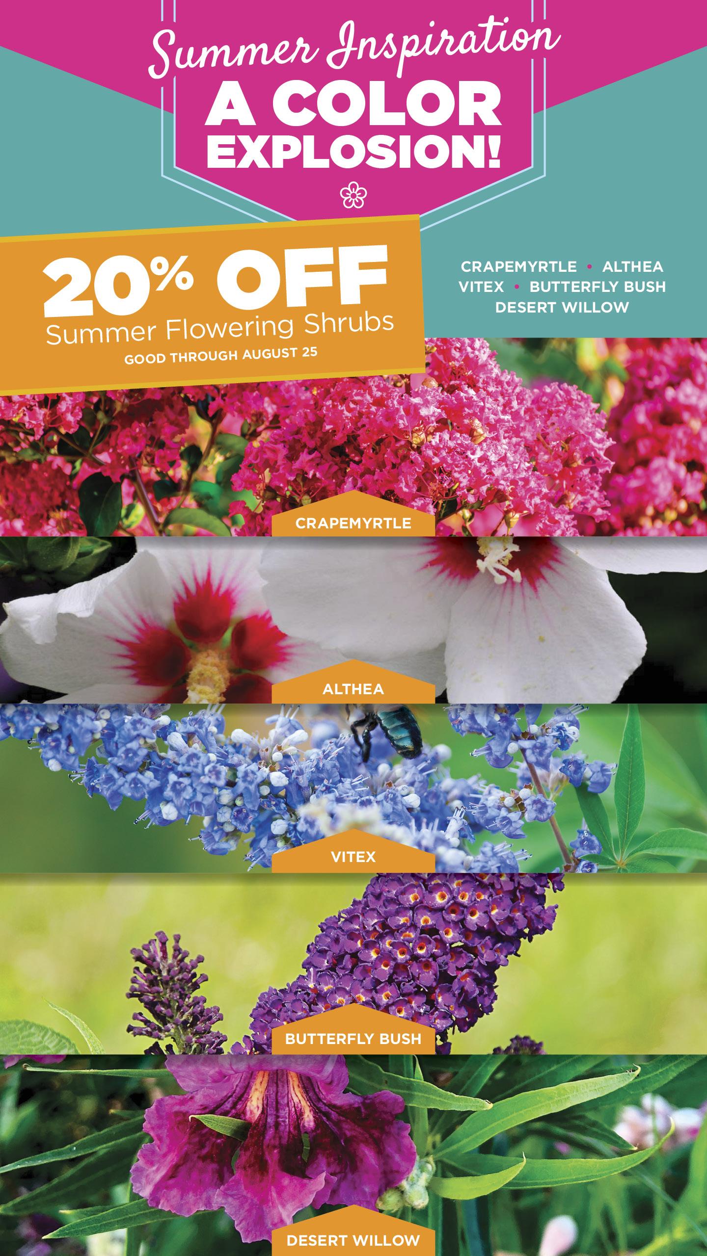 Summer Flowering Shrubs | 20% Off | TLC
