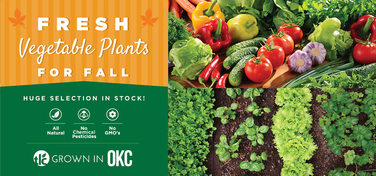 Fresh Vegetable Plants for Fall   TLC