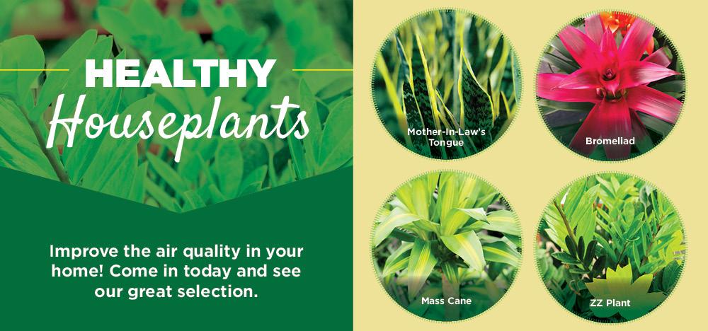 Healthy Houseplants | TLC Garden Center