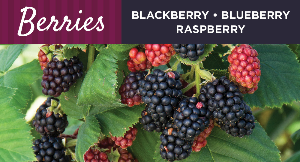 Berries | TLC Garden Centers