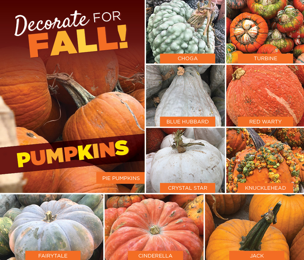 Decorate for Fall With Pumpkins | TLC
