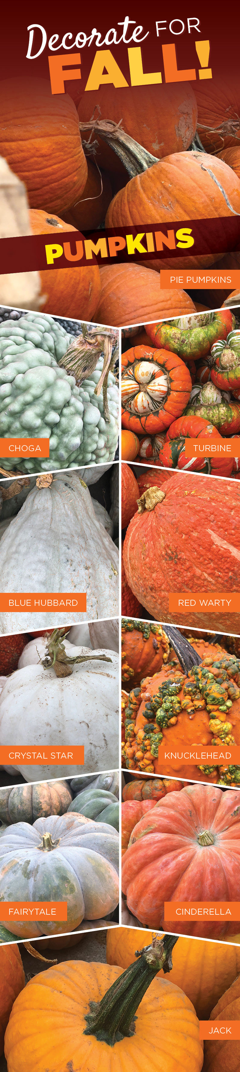 Decorate for Fall With Pumpkins   TLC