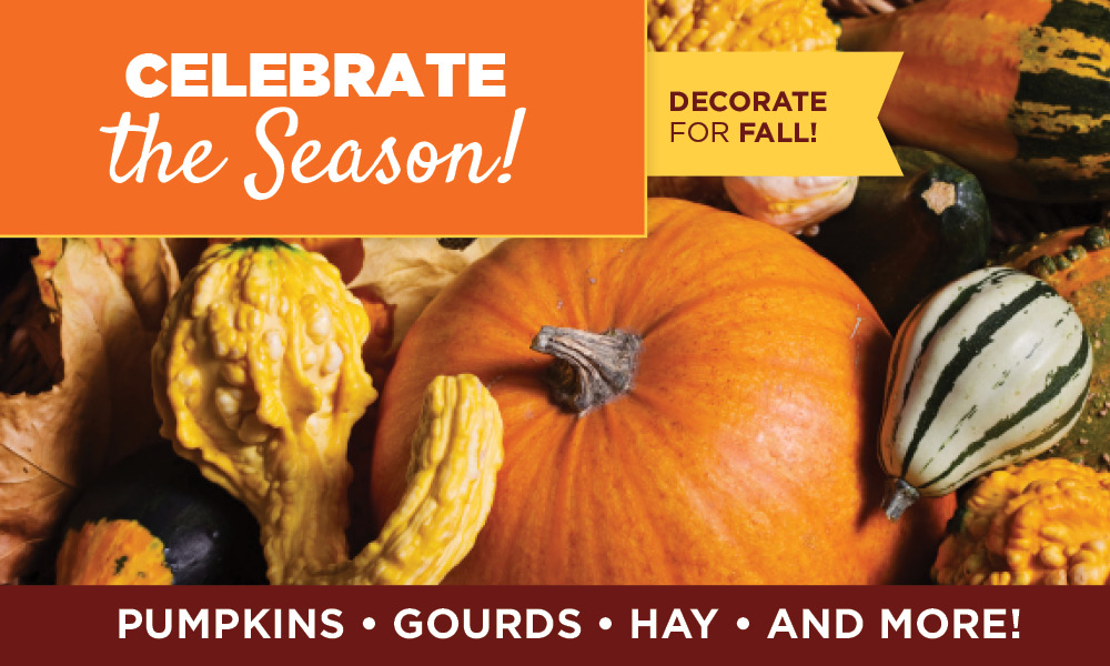 Decorate for Fall | TLC Garden Centers