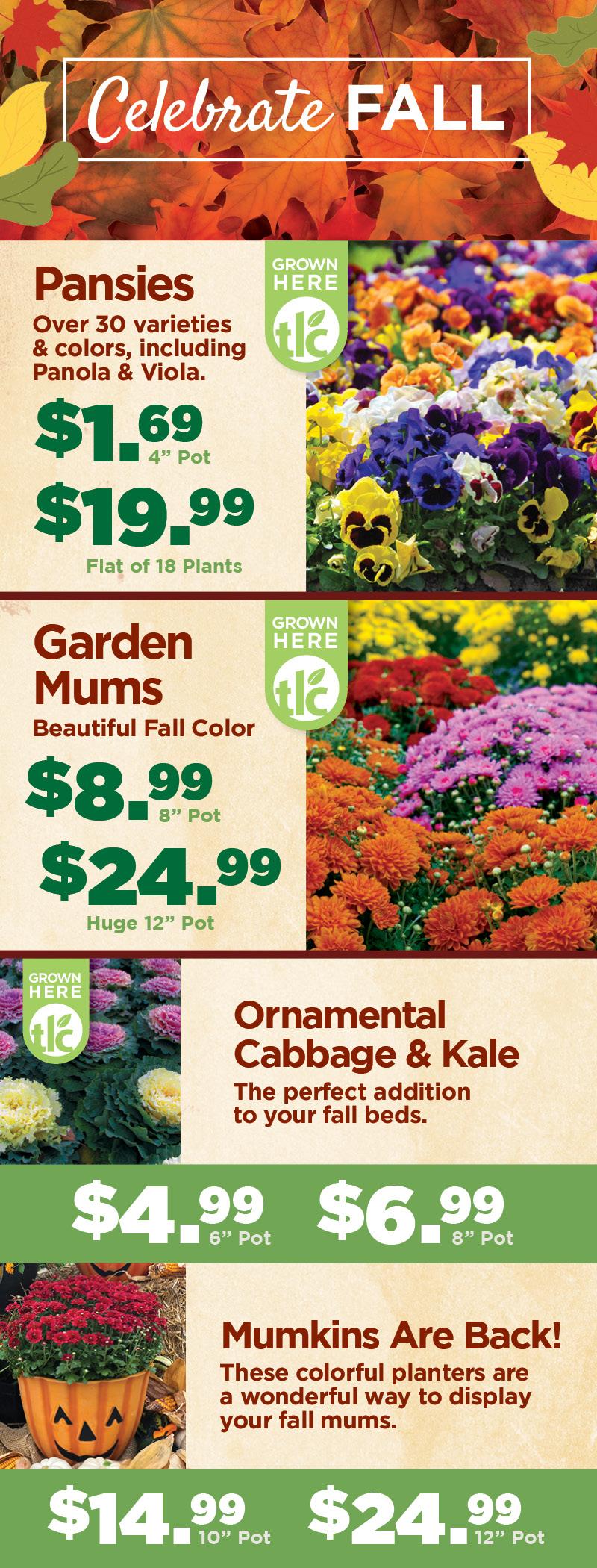 Celebrate Fall | TLC Garden Centers