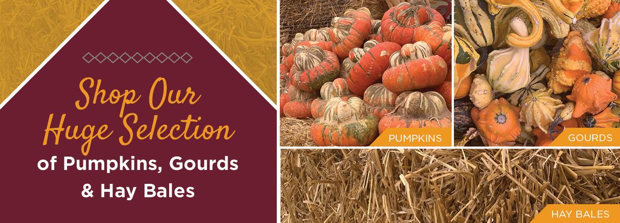 Huge Selection of Pumpkins, Gourds & Hay Bales | TLC