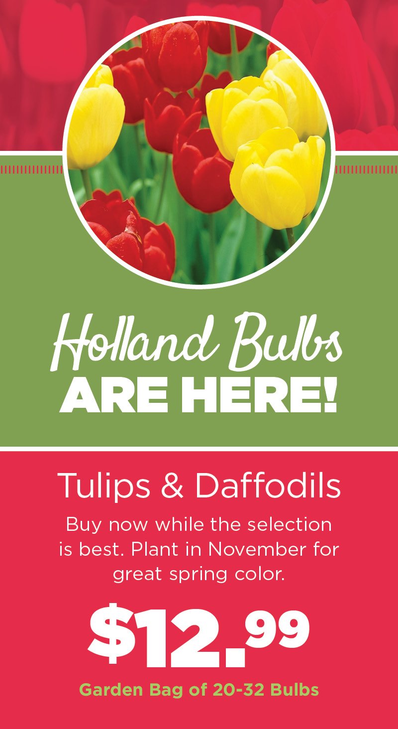 Holland Bulbs Are Here | TLC
