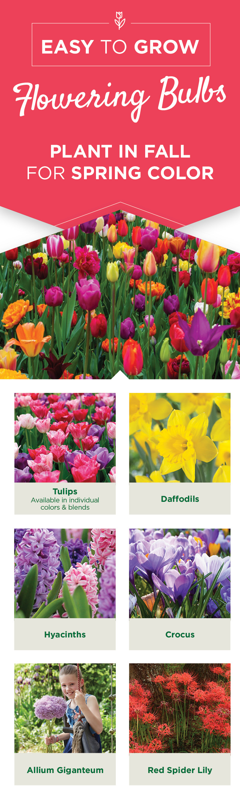 Easy to Grow Flowering Bulbs | TLC