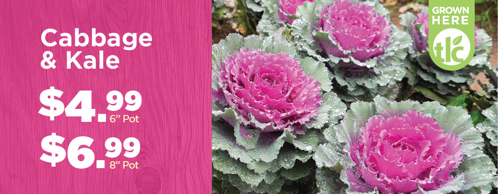 Cabbage & Kale | TLC Garden Centers