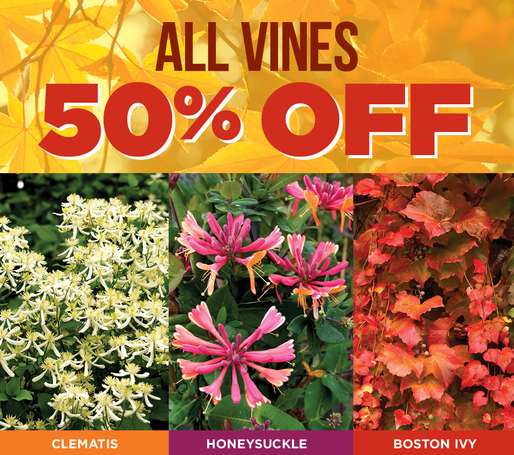Vines Half Off | TLC Garden Centers