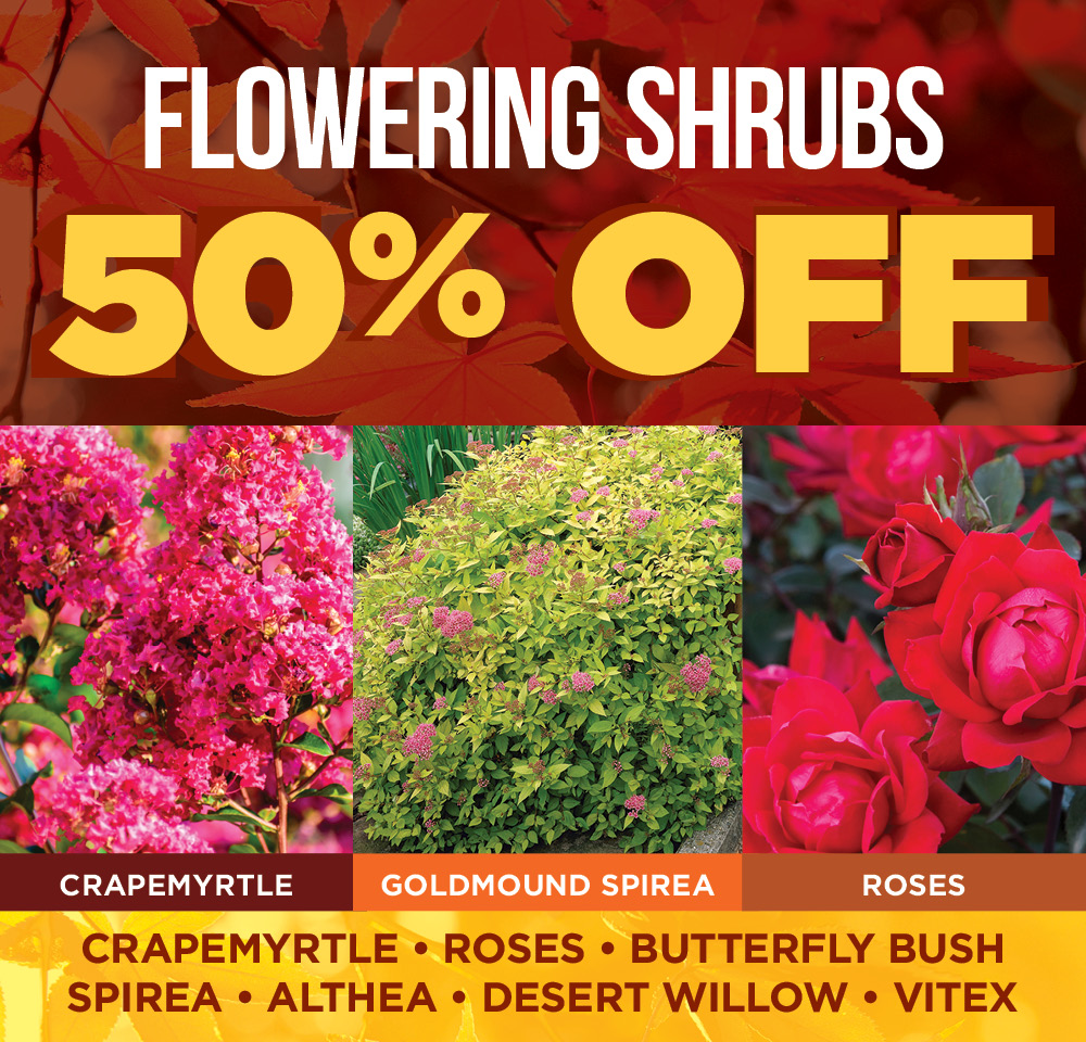 Flowering Shrubs Off | TLC Garden Centers