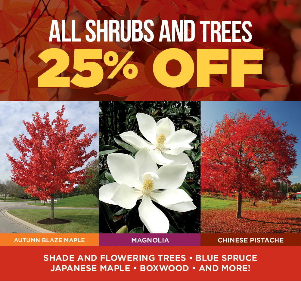 Shrubs and Trees | TLC Garden Centers