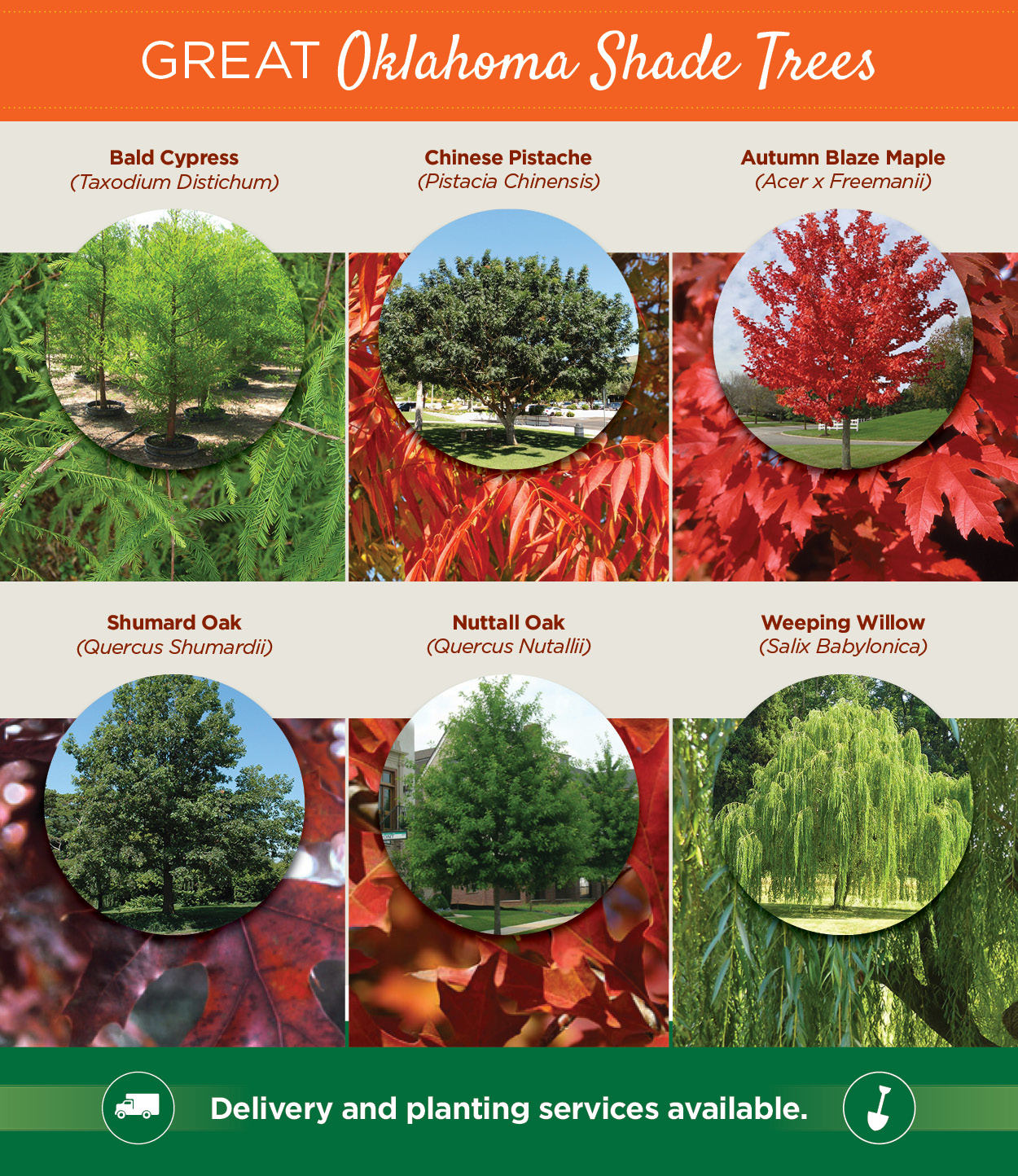 Great Oklahoma Shade Trees | TLC Garden Centers