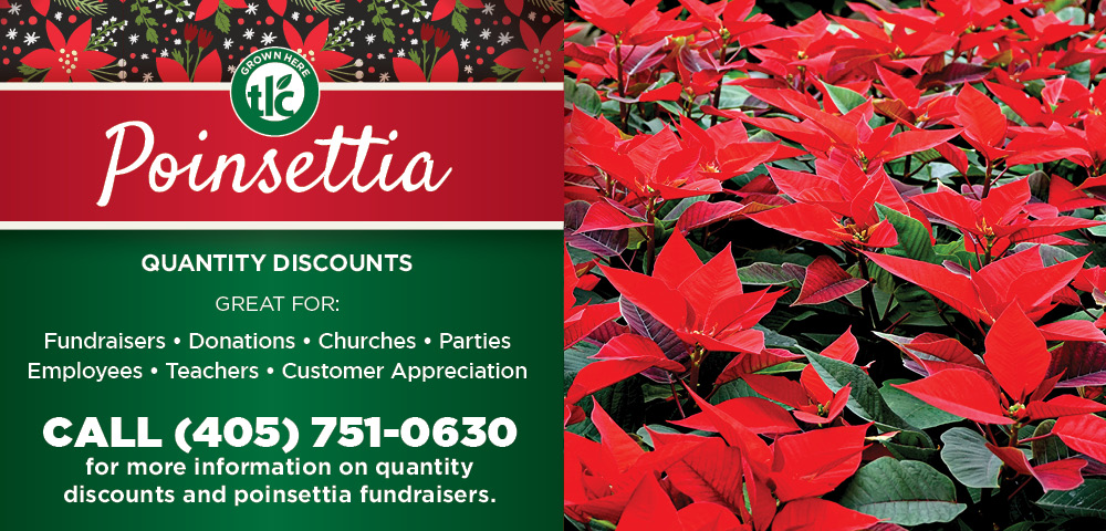 Poinsettia | TLC Garden Centers