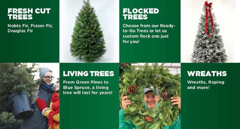 Christmas Trees and Wreaths | TLC Garden Centers