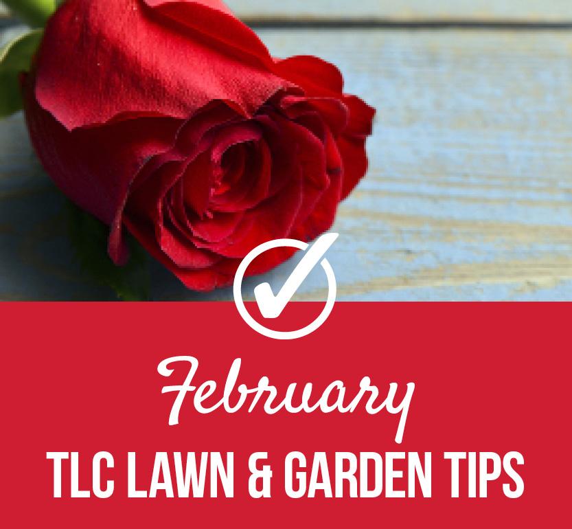 Redbud | TLC Garden Centers
