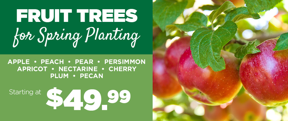 Fruit Trees | TLC Garden Centers