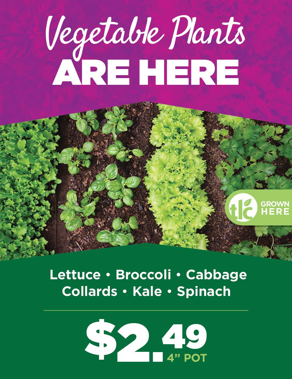 Vegetable Plants | TLC Garden Centers