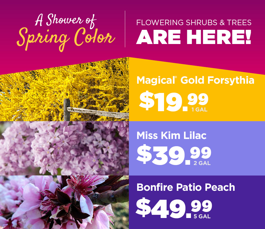 Flowering Shrubs | TLC Garden Centers