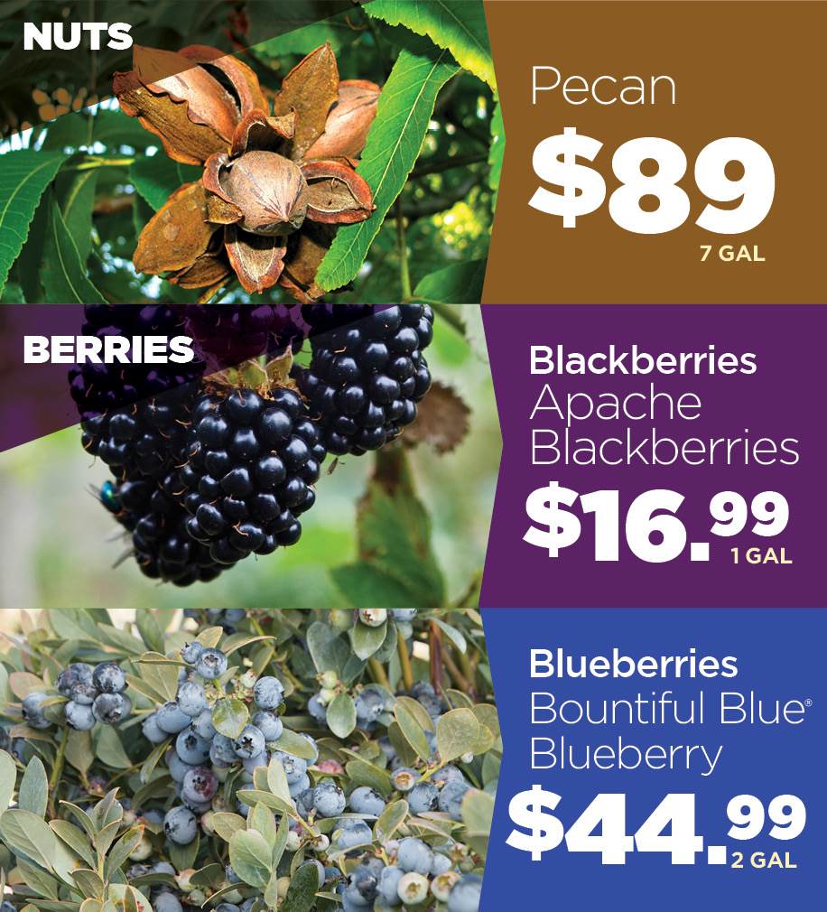Nuts and Berries | TLC Garden Centers
