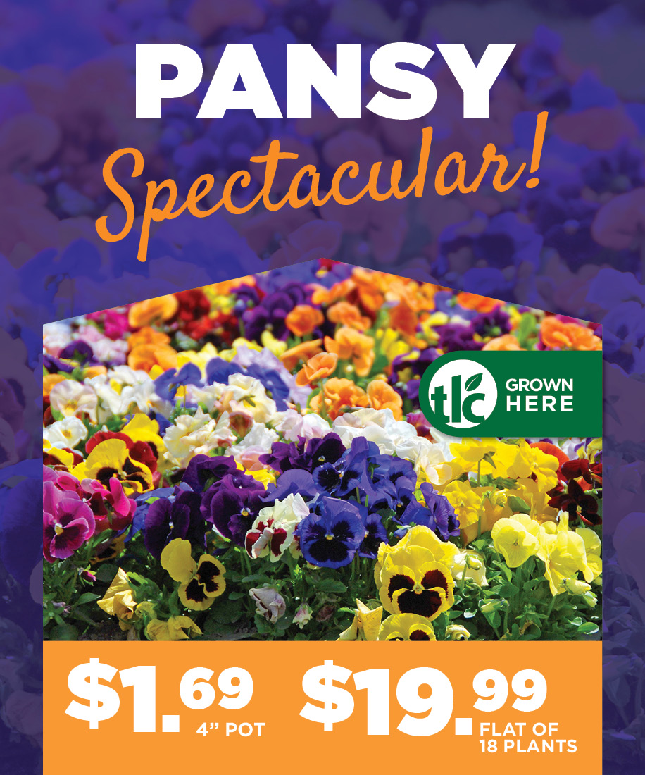 Pansies | TLC Garden Centers