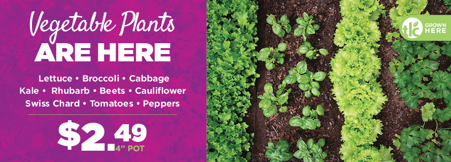 Vegetable Plants | TLC Garden Centers