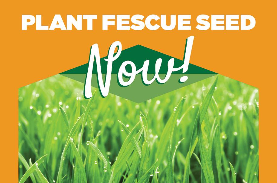 Fescue | TLC Garden Centers