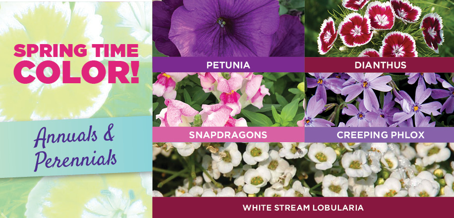 Spring Time Color | TLC Garden Centers