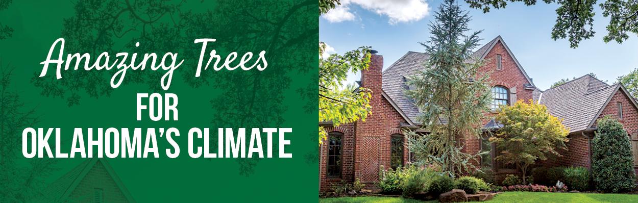 Amazing Trees | TLC Garden Centers