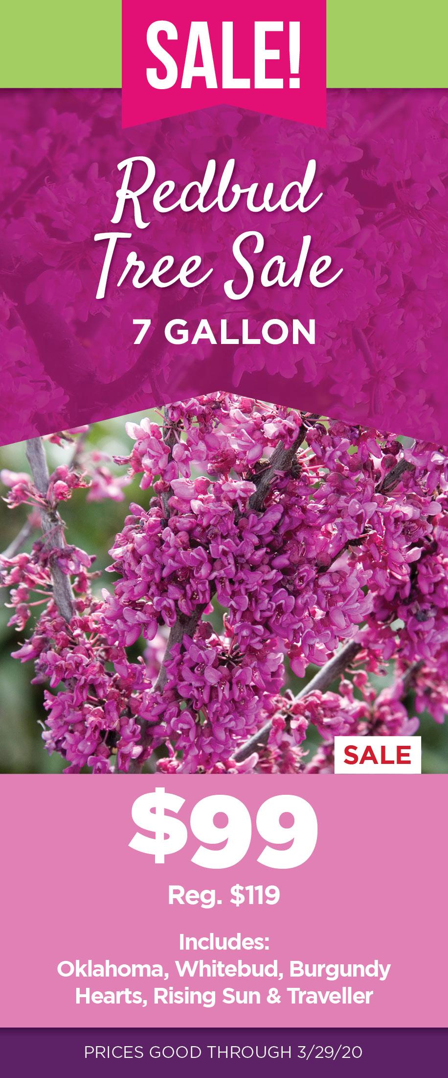 Redbud Sale   TLC Garden Centers