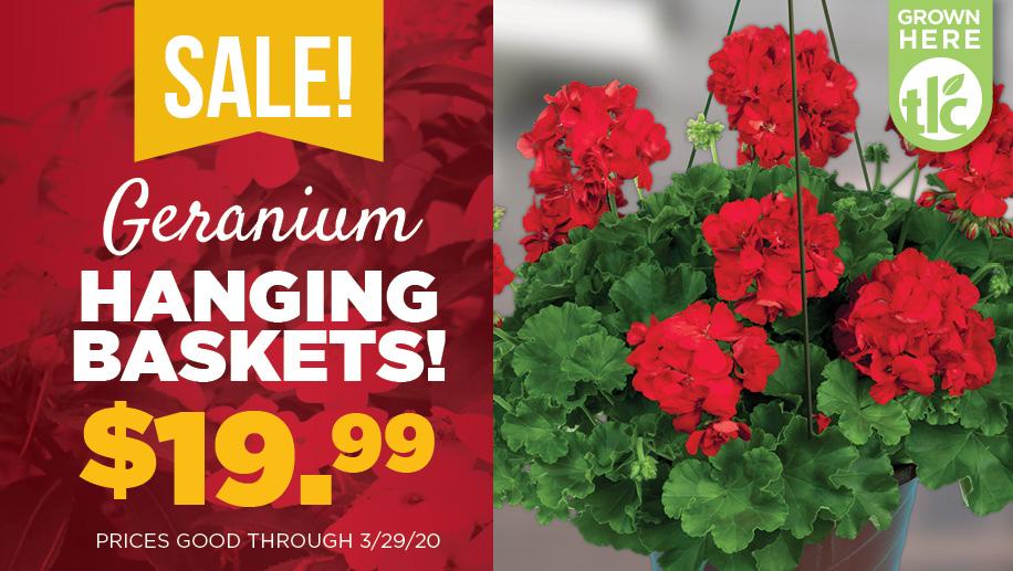 Geranium Basket Sale   TLC Garden Centers