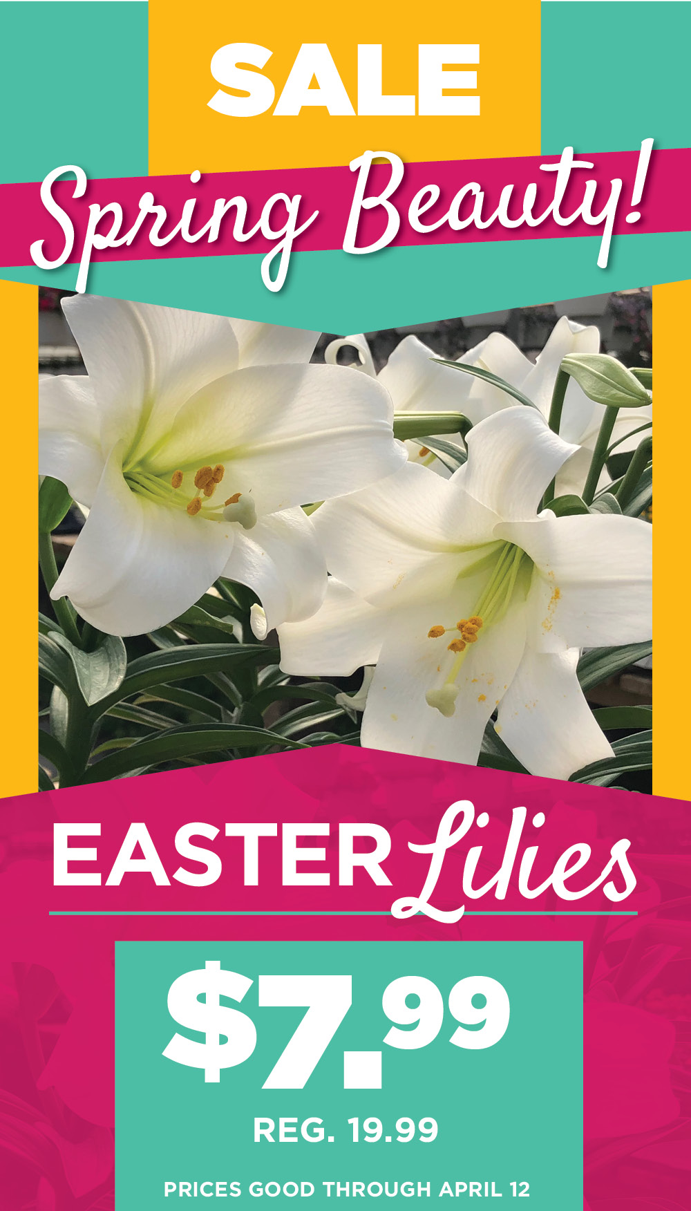 Easter Lily Sale | TLC Garden Centers