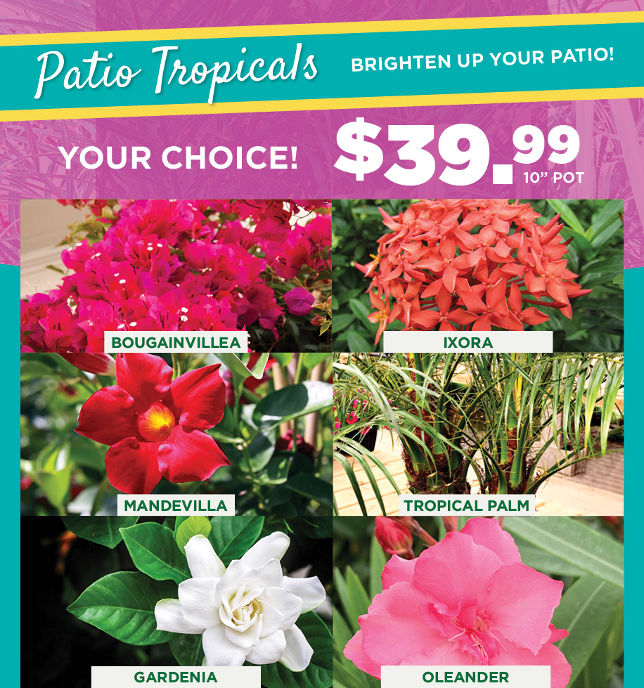 Patio Tropicals | TLC Garden Centers