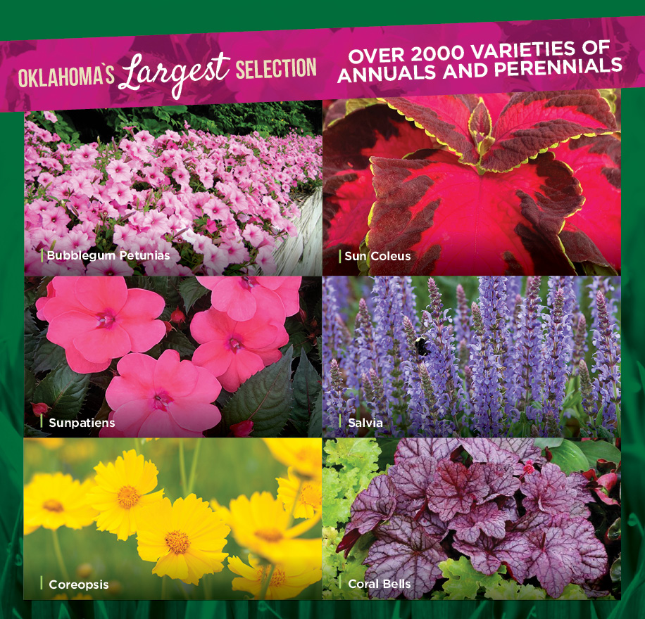 Oklahomas Largest Selection | TLC Garden Centers