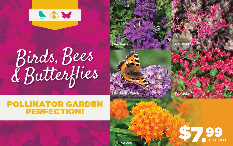 Birds, Bees, Butterflies | TLC Garden Centers