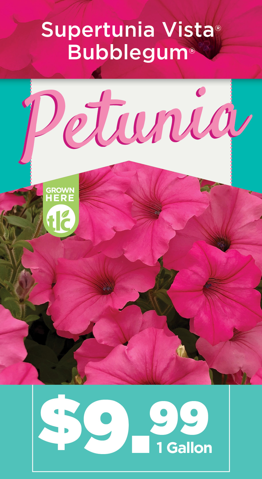 Petunia | TLC Garden Centers