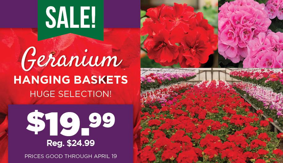 Geranium Sale | TLC Garden Centers